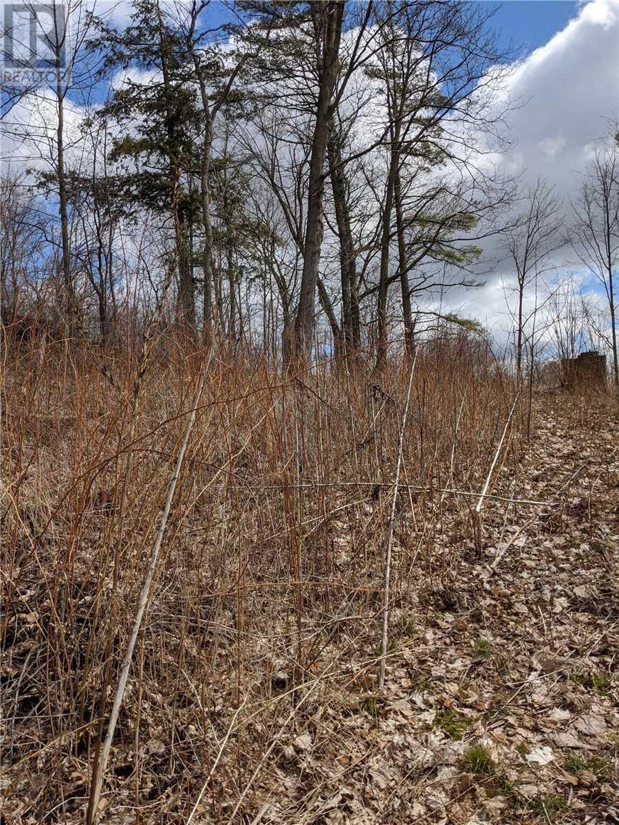 0 Birch Point Dr, Kawartha Lakes, Ontario  K0L 1T0 - Photo 3 - X4740316